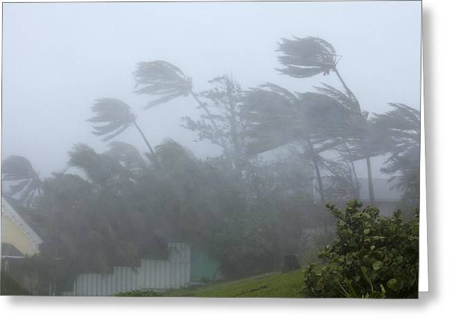 Storm Damage Greeting Cards - Strong winds during Hurricane Irene Greeting Card by Science Photo Library
