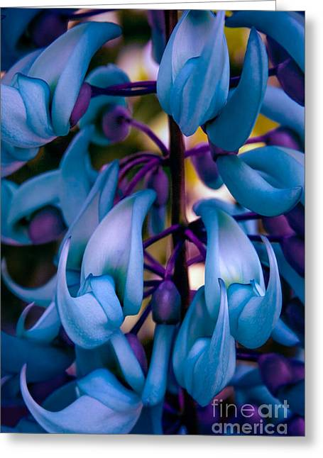 Lei Greeting Cards - Strongylodon macrobotrys - Blue Jade Vine Greeting Card by Sharon Mau