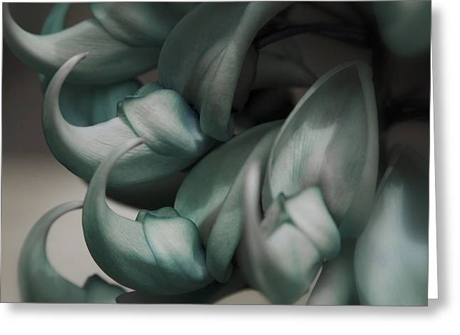Blue Claws Greeting Cards - Strongylodon macrobotrys - emerald vine - Blue Jade Vine Greeting Card by Sharon Mau