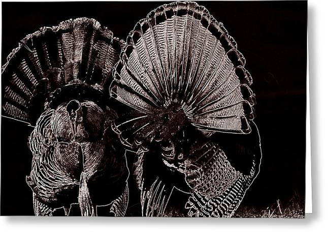 Spring Gobbler. Greeting Cards - Strutters Greeting Card by Todd Hostetter