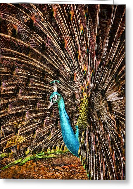 Strut Greeting Cards - Strutting Peacock Greeting Card by David Smith
