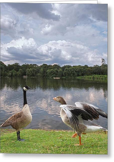 Orange And Brown Winged Greeting Cards - Strutting Their Stuff - Geese at the Lake Greeting Card by Gill Billington