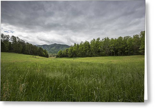 Green Foliage Greeting Cards - Stuck in the Field Greeting Card by Jon Glaser