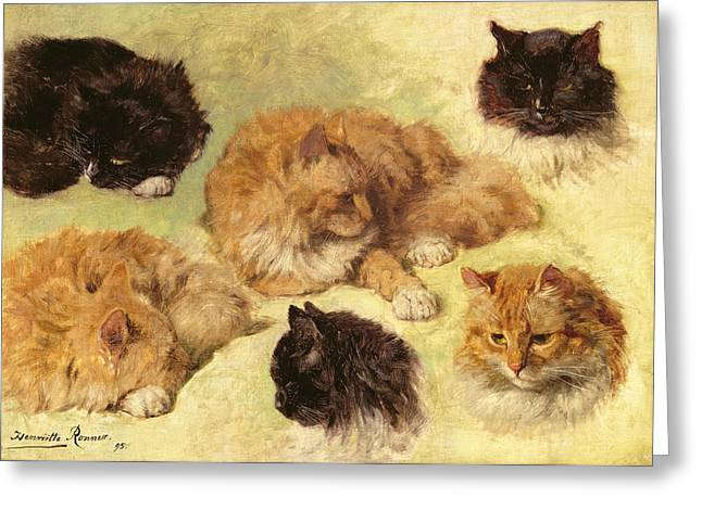 17 Greeting Cards - Studies Of Cats, 1895 Greeting Card by Henriette Ronner-Knip