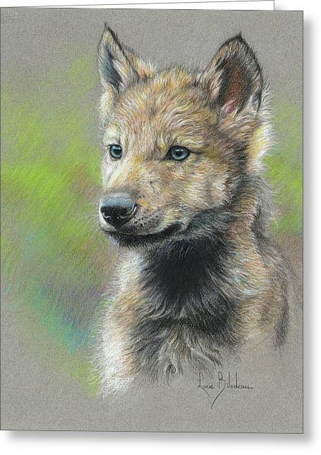 Baby Animal Drawings Greeting Cards - Study - Baby Wolf Greeting Card by Lucie Bilodeau
