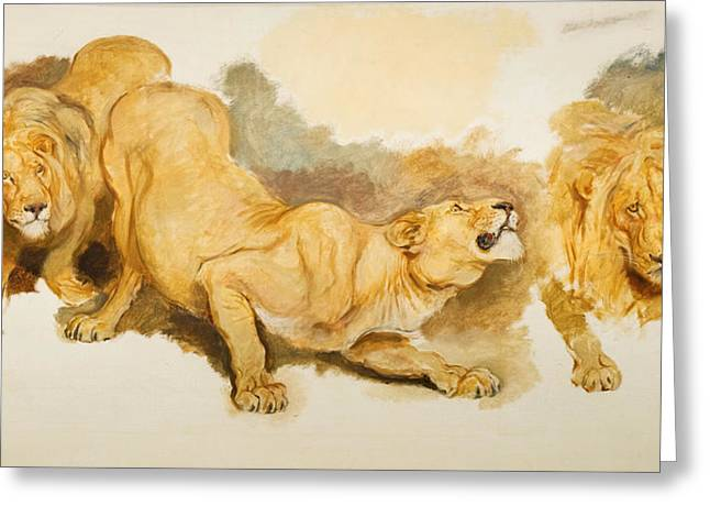 Lions Greeting Cards - Study for Daniel in the Lions Den Greeting Card by Briton Riviere