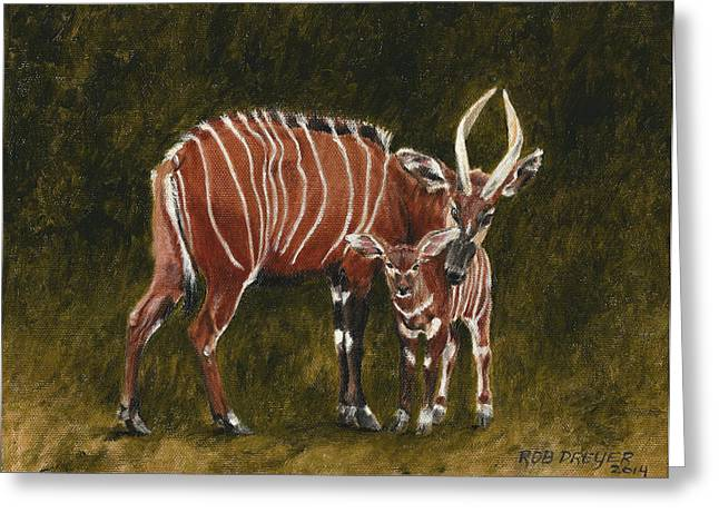 Study Of A Mountain Bongo Greeting Card by Rob Dreyer AFC