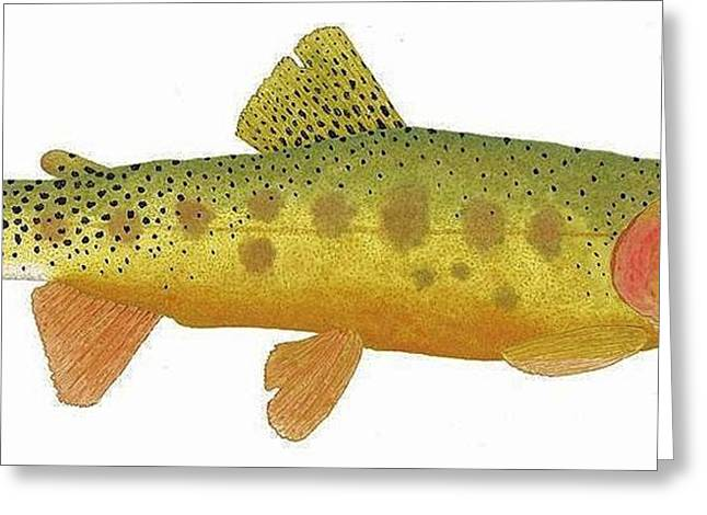 Thom Glace Greeting Cards - Study of a Rio Grande Cutthroat Trout Greeting Card by Thom Glace