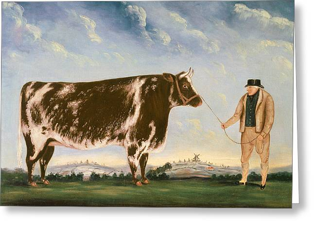 Williams Greeting Cards - Study of a Shorthorn Greeting Card by William Joseph Shayer