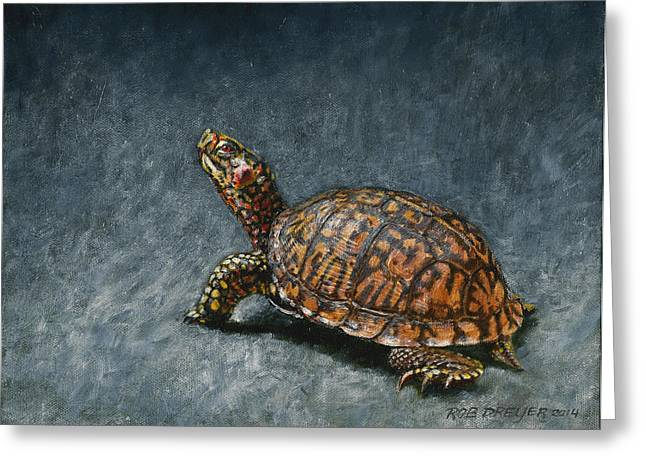 Boxed Greeting Cards - Study of an Eastern Box Turtle Greeting Card by Rob Dreyer AFC