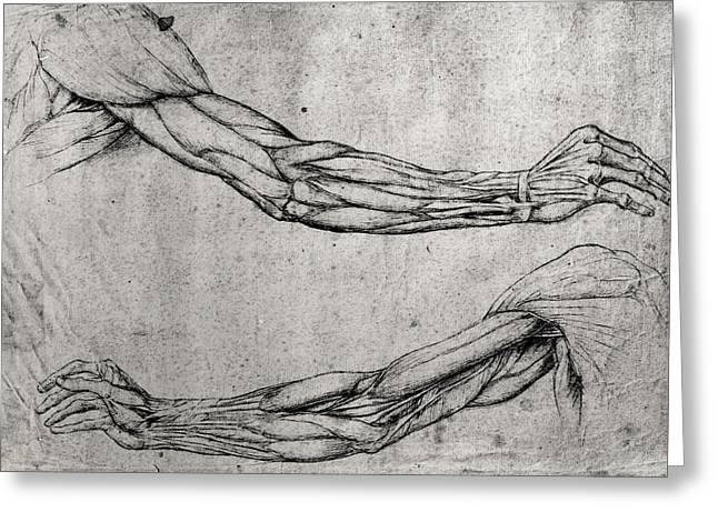 Ink Drawing Greeting Cards - Study of Arms Greeting Card by Leonardo Da Vinci