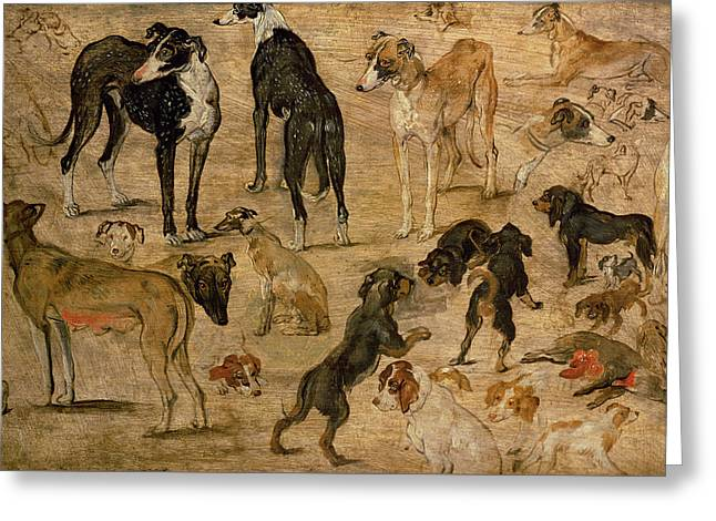 Study Of Hounds, 1616 Greeting Card by Jan the Elder Brueghel