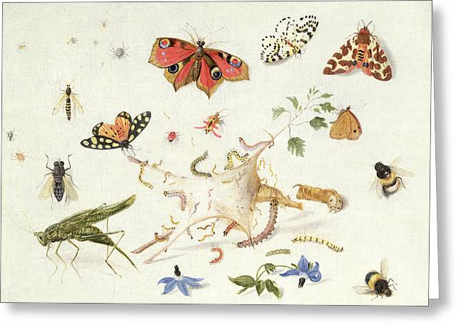 Cricket Paintings Greeting Cards - Study of Insects and Flowers Greeting Card by Ferdinand van Kessel