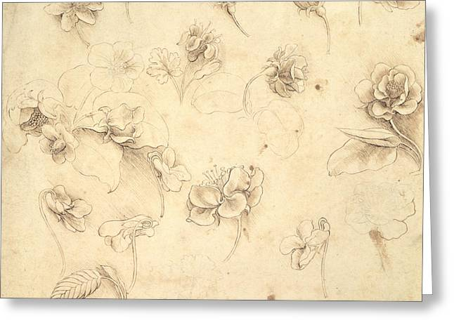 Leaves Of Grass Greeting Cards - Study of the Flowers of Grass like Plants Greeting Card by Leonardo da Vinci