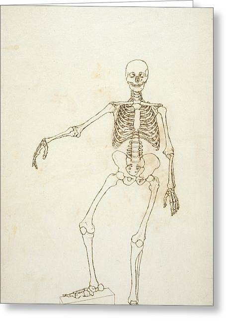 Biology Greeting Cards - Study Of The Human Figure, Anterior View, From A Comparative Anatomical Exposition Of The Structure Greeting Card by George Stubbs