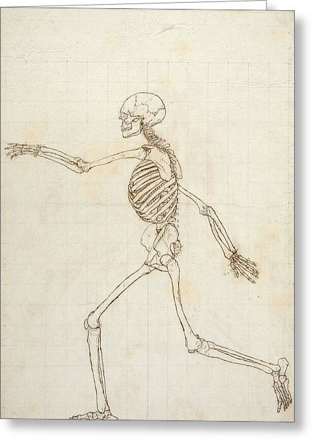 Biological Greeting Cards - Study Of The Human Figure, Lateral View, From A Comparative Anatomical Exposition Of The Structure Greeting Card by George Stubbs