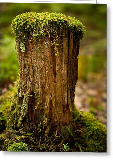 Moss Greeting Cards - Stump Greeting Card by Shane Holsclaw
