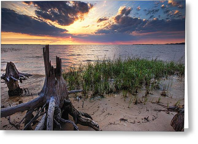 Sand Fences Greeting Cards - Stumps and Sunset on Oyster Bay Greeting Card by Michael Thomas