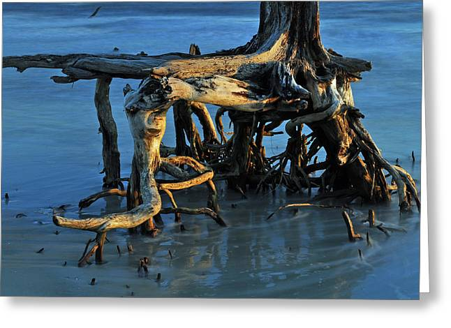 Beach Photograph Greeting Cards - Stumps in the Ocean 1.2 Greeting Card by Bruce Gourley