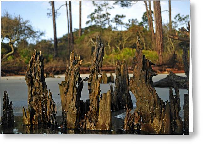 Beach Photographs Greeting Cards - Stumps on the Beach 1.1 Greeting Card by Bruce Gourley