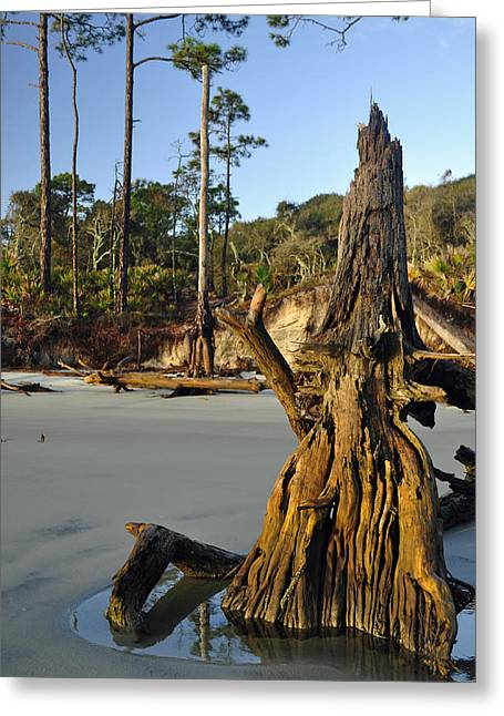 Beach Photograph Greeting Cards - Stumps on the Beach 1.3 Greeting Card by Bruce Gourley