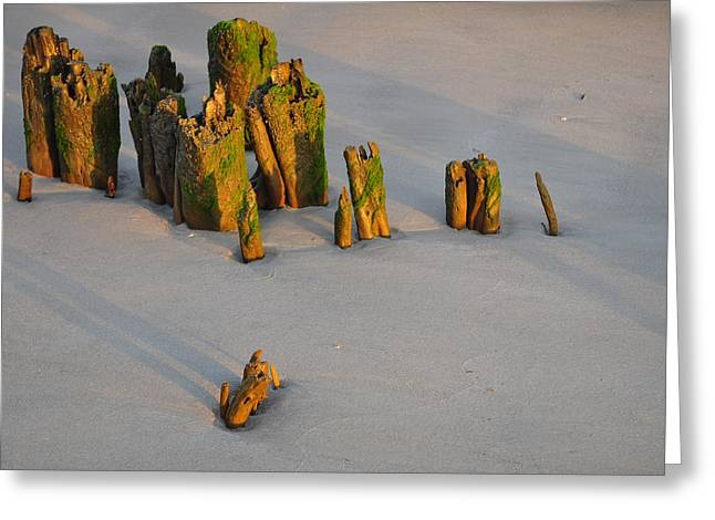 Beach Photographs Greeting Cards - Stumps on the Beach 1.4 Greeting Card by Bruce Gourley