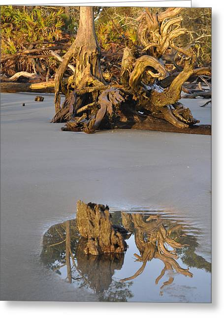 Beach Photographs Greeting Cards - Stumps on the Beach 1.5 Greeting Card by Bruce Gourley