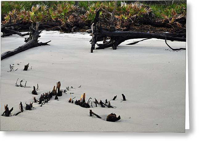 Beach Photographs Greeting Cards - Stumps on the Beach 1.6 Greeting Card by Bruce Gourley