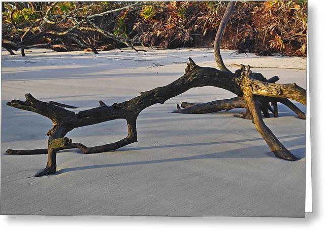 Beach Photograph Greeting Cards - Stumps on the Beach 1.7 Greeting Card by Bruce Gourley