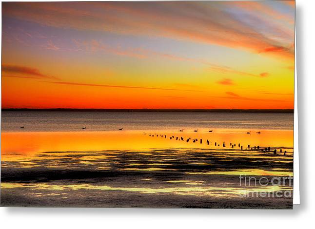 Duck Framed Prints Greeting Cards - Stunning Sunset over Currituck Outer Banks Greeting Card by Dan Carmichael