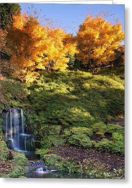 Fall Colors Greeting Cards - Stunning vibrant Autumn landscape of waterfall Greeting Card by Matthew Gibson