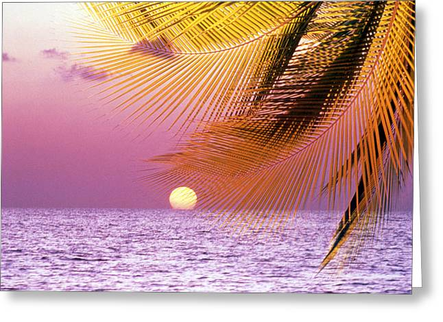 """sunset Photography"" Greeting Cards - Stylized Tropical Scene With Violet Greeting Card by Panoramic Images"
