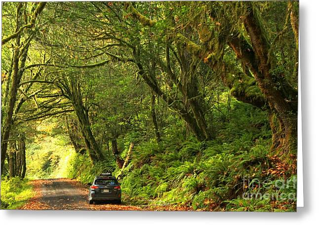 Subaru In The Rainforest Greeting Card by Adam Jewell
