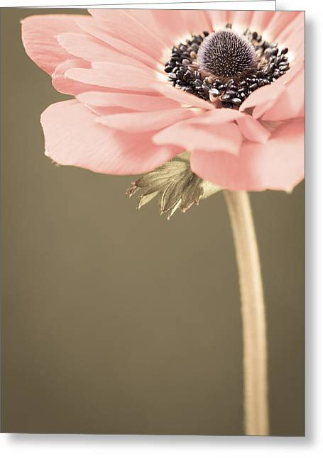 Secret Gardens Greeting Cards - Subdued Anemone Greeting Card by Caitlyn  Grasso