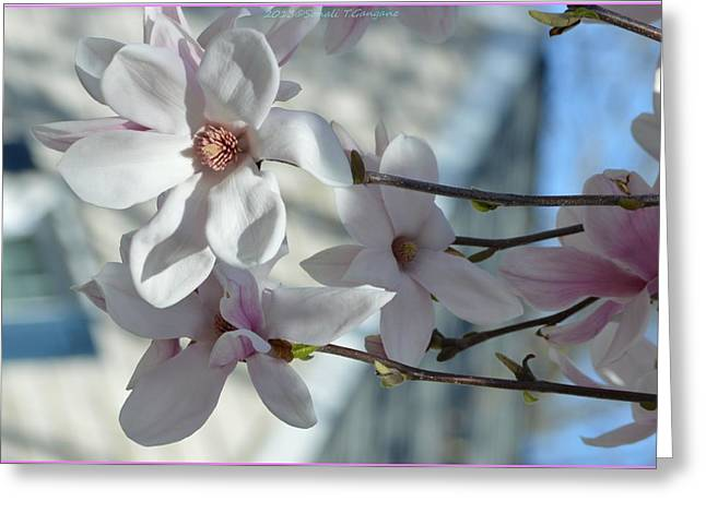 Acrylicprint Greeting Cards - Sublime Magnolia Greeting Card by Sonali Gangane