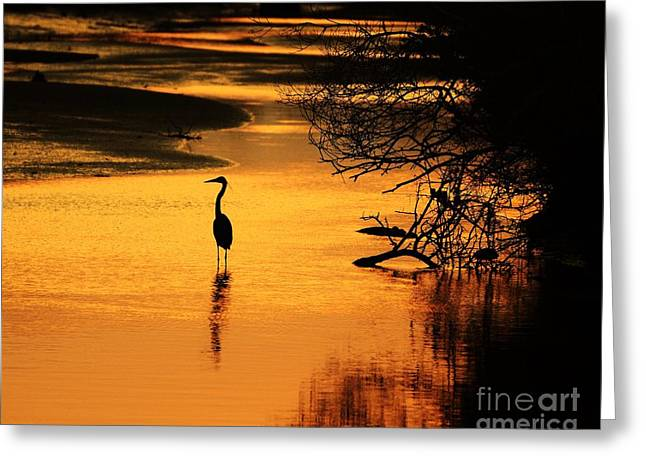 Grey Heron Greeting Cards - Sublime Silhouette Greeting Card by Al Powell Photography USA