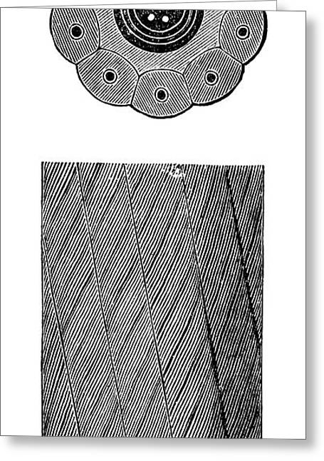 Submarine Telegraph Cable Greeting Card by Science Photo Library