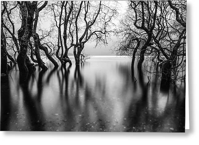 Scotland Fineart Greeting Cards - Submerging Trees Greeting Card by John Farnan