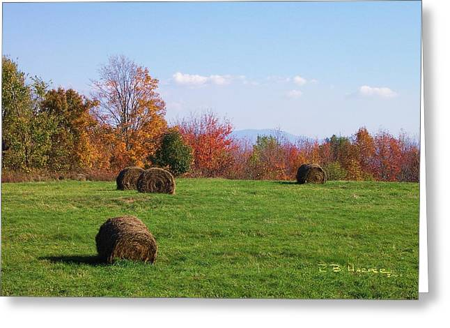 Franklin Farm Greeting Cards - Subsistence Greeting Card by R B Harper