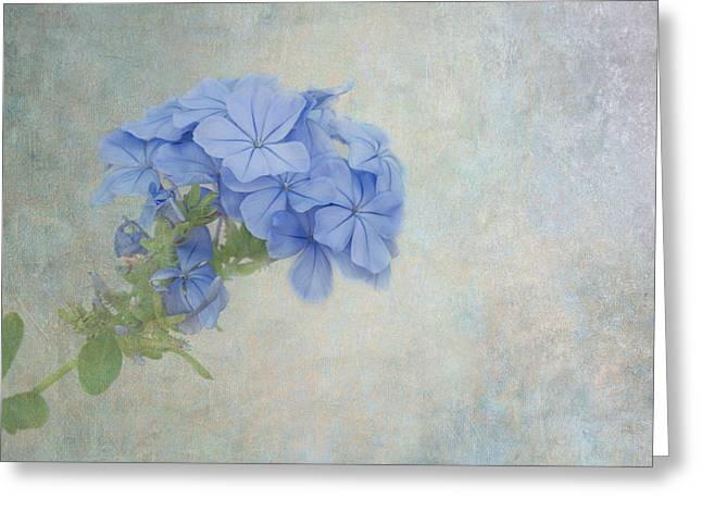 Subtle Colors Greeting Cards - Subtle Blues Greeting Card by Kim Hojnacki
