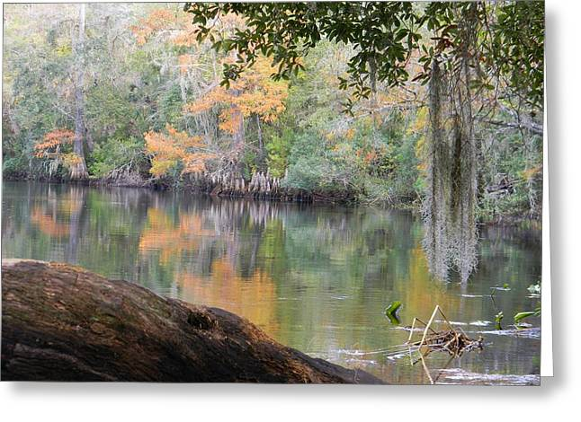 Subtle Colors Greeting Cards - Subtle Colors of Fall Greeting Card by Warren Thompson