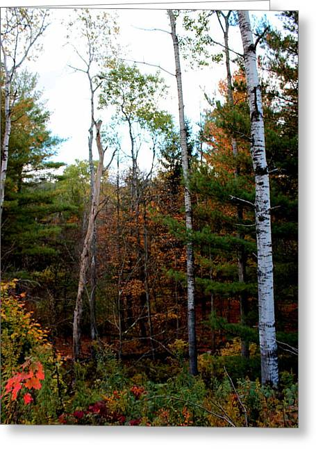 Subtle Colors Greeting Cards - Subtle Fall Colors III Greeting Card by Brian Lucia
