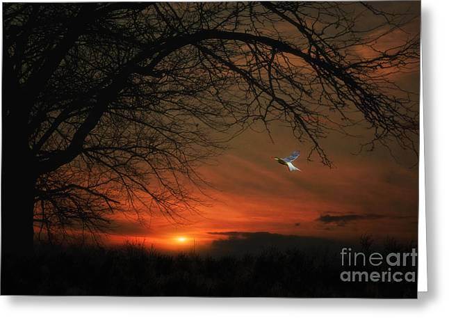 Sundown Framed Prints Greeting Cards - Suburban Sunset Greeting Card by Tom York Images
