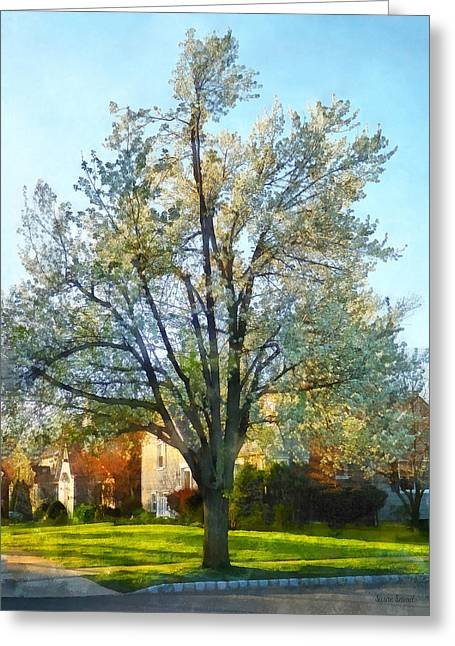 Houses Greeting Cards - Suburbs - Late Afternoon in Spring Greeting Card by Susan Savad