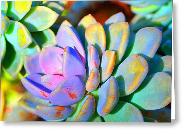 Floral Photographs Greeting Cards - Succulent Color - Botanical Art by Sharon Cummings Greeting Card by Sharon Cummings