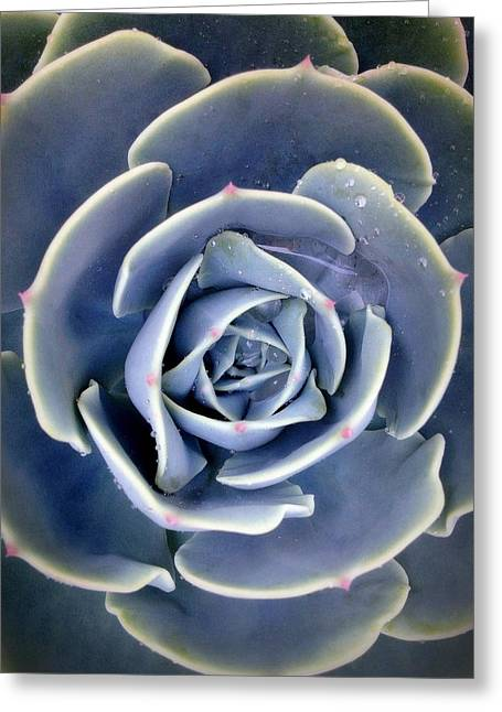 Succulent  Greeting Card by Janice Sullivan