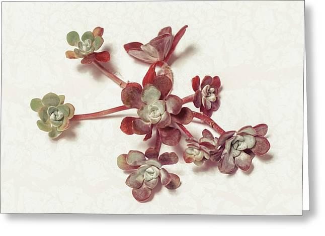Succulent Greeting Cards - Succulent Plant 1 Greeting Card by Lucid Mood