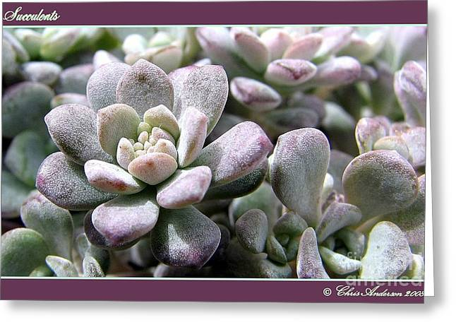 Mistymisschristie Greeting Cards - Succulents Greeting Card by Chris Anderson