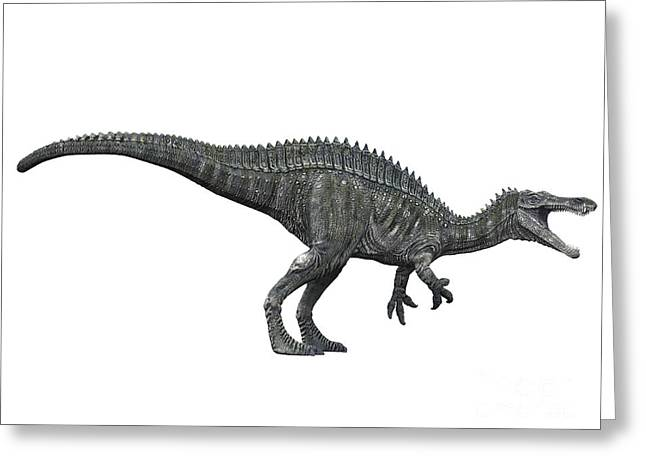 Large Scale Greeting Cards - Suchomimus Dinosaur, White Background Greeting Card by Craig Brown