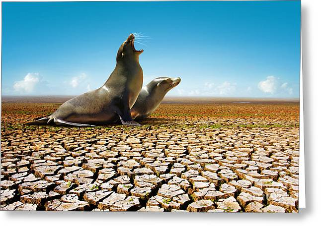 Suffering Seals Greeting Card by Carlos Caetano